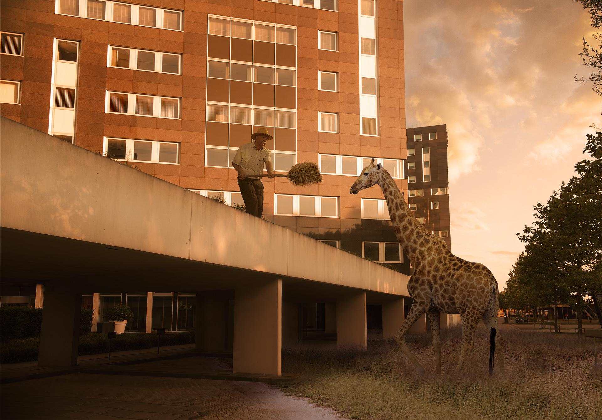 Future animal Kindoms (Giraffe)